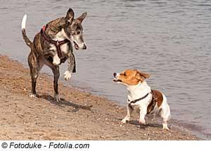 Holidaycheck kroatien mit hund