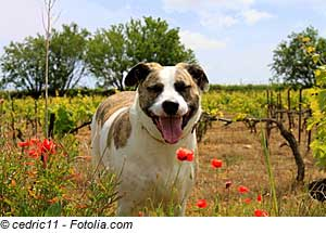 Languedoc-Roussillon mit Hund